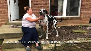 KGDR's Christmas Miracle. 7 months ago in May, Zeus's family had to...