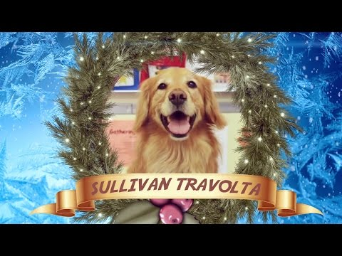 Sullivan The Therapy Dog Makes Christmas Movie With Inclusion Films