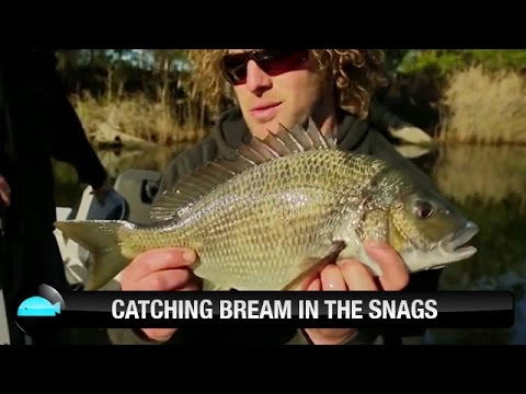 Catching Bream In The Snags On Soft Plastic Lures | We Flick Fishing Videos