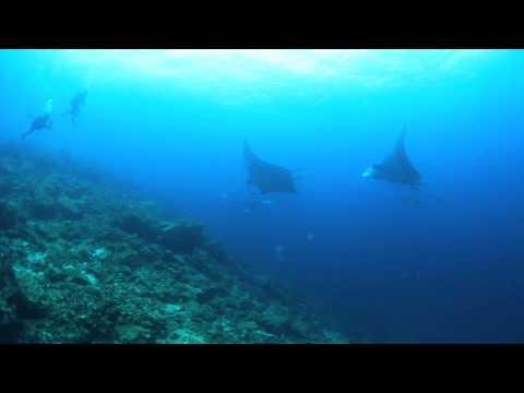 Scuba Jeff @ Anti Gravity Diving Center Koh Lanta