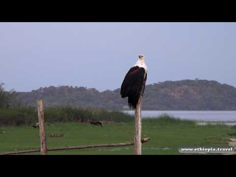 Ethiopia - Birds Island on lake ziwaw (Part 4)