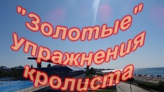 """видео: """"Золотые упражнения кролиста"""""""