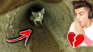 قطة تعلقت داخل انبوب المجاري ( راحو ينقذونها ) !!
