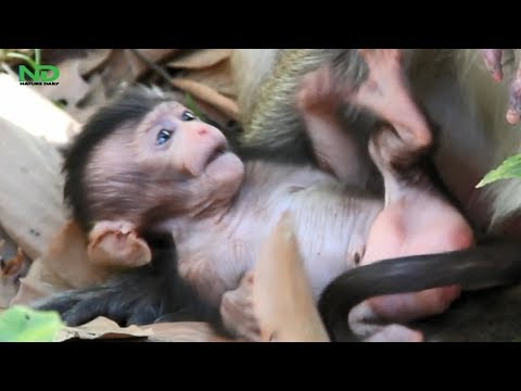 Oldest Mom Don't Care And Leave Newborn Away, Nature Daily