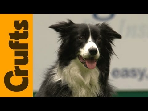 Freestyle Heelwork to Music Competition - Crufts 2012
