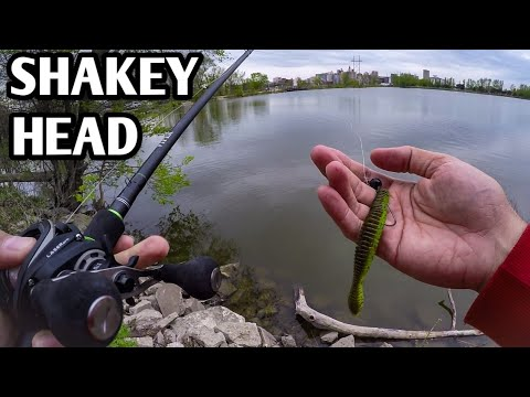Bank Fishing With A Shakey Head (Finicky Bass)