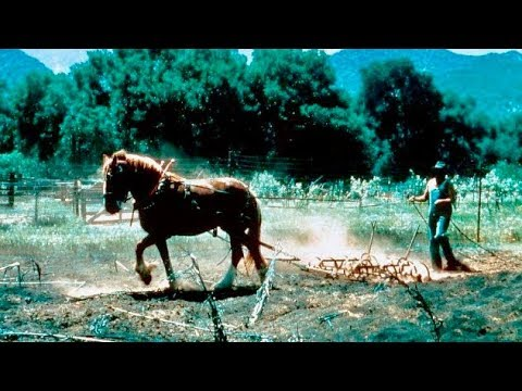 High Lonesome | Classic WESTERN Movie | English | Free Film In Full Length | Cowboy Film