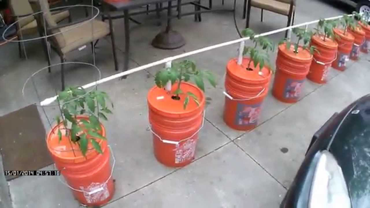 Easy Watering - Self Watering Bucket System - Growing in Buckets - YouTube