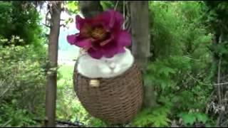 EXCLUSIVE Litter Kwitter Cat Toilet Training