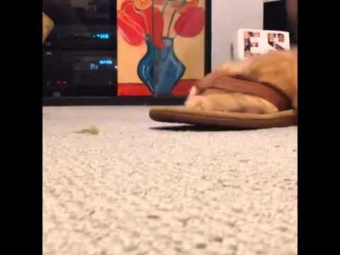 Cat stuck in a flip flop