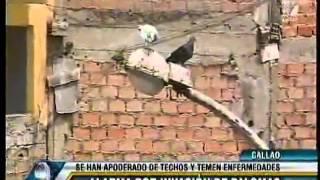 MUNICIPALIDAD DE LA PERLA ANUNCIA CAMPAÑA DE LIMPIEZA DE TECHOS POR PROLIFERACION DE PALOMAS