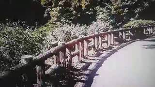 トウキョウ 武蔵野市 の 井の頭恩賜公園 美穂ちゃんが現れるかなって? ?...