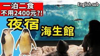 夜宿海生館企鵝區:海景企鵝房超夢幻Sleeping with penguin in ...