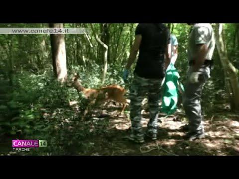 Animali Selvatici In Città: Numerose Le Richieste Di Soccorso