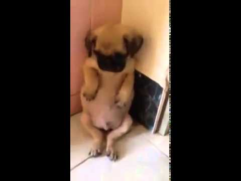Cute Puppy Receives Punishment