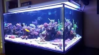 Higor's Reef - 08/17/15 Update