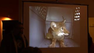 Coyote Lecture 3/27/15