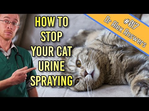 How To Stop A Cat Spraying Urine All Over Your House! - Cat Health Vet Advice