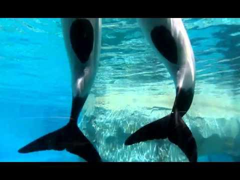 dolphin poop youtube