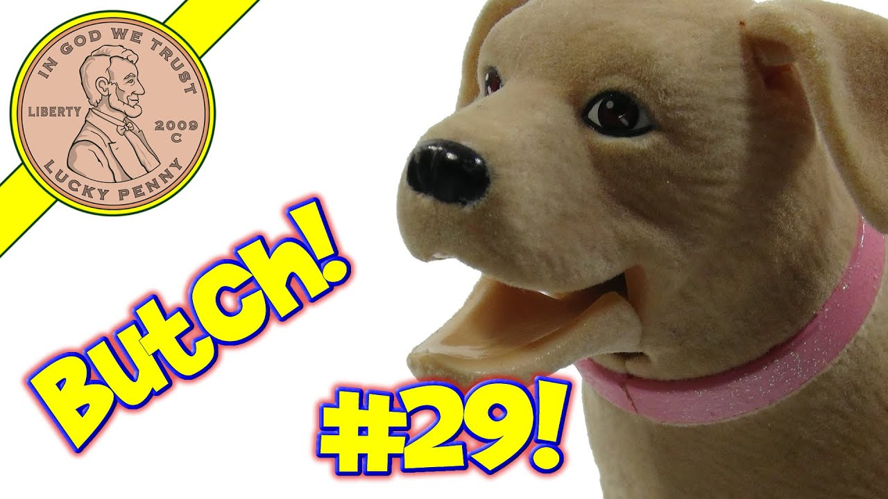 butch the dog