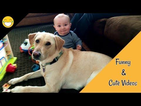 FUNNY & CUTE VIDEOS 2018 | PET ANIMALS