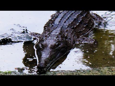Australia vlogs day 2| David Fleay Wildlife park