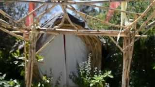 Making Your Own Trellis Using Arundo-donax, Grass In California To Make Things For The Garden.