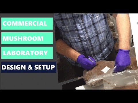 How To Run A Commercial Mushroom Lab - Setting Up a Laboratory for Growing Mushrooms