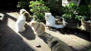 12 11 02 Persian kitties: we need a bigger sunny spot!