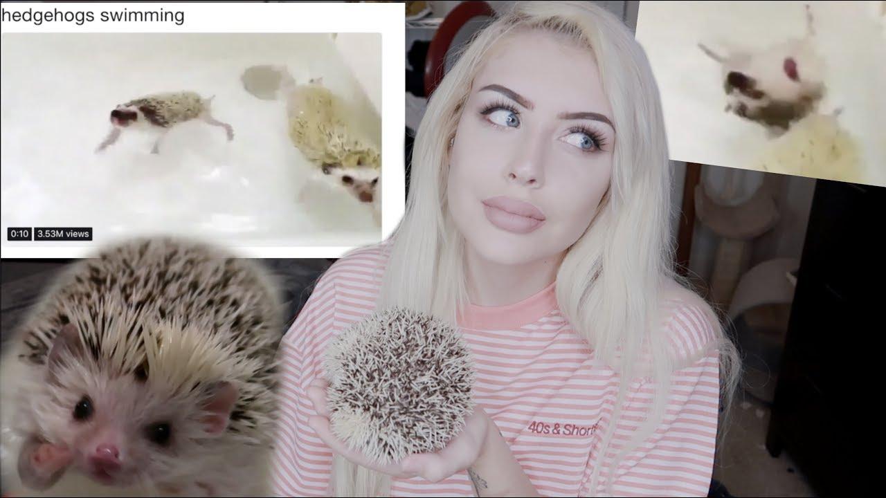 hedgehogs-hate-swimming-stop-my-hedgehog-update