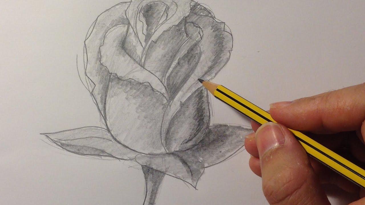 Cómo Dibujar Una Rosa Youtube