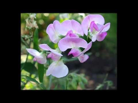 комнотные цветы названием и фото