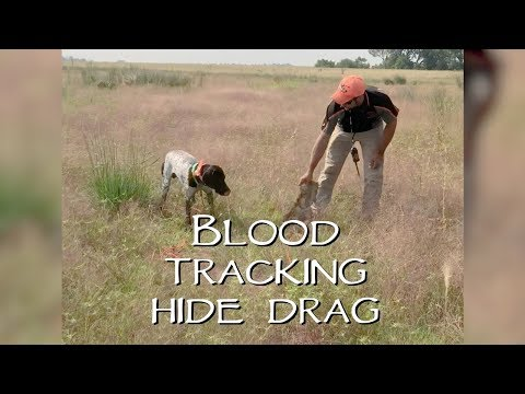 Blood Tracking - Hide Drag - Versatile Dog Training