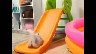 Смешные котики | Лучшая подборка видео приколов про котов и котят