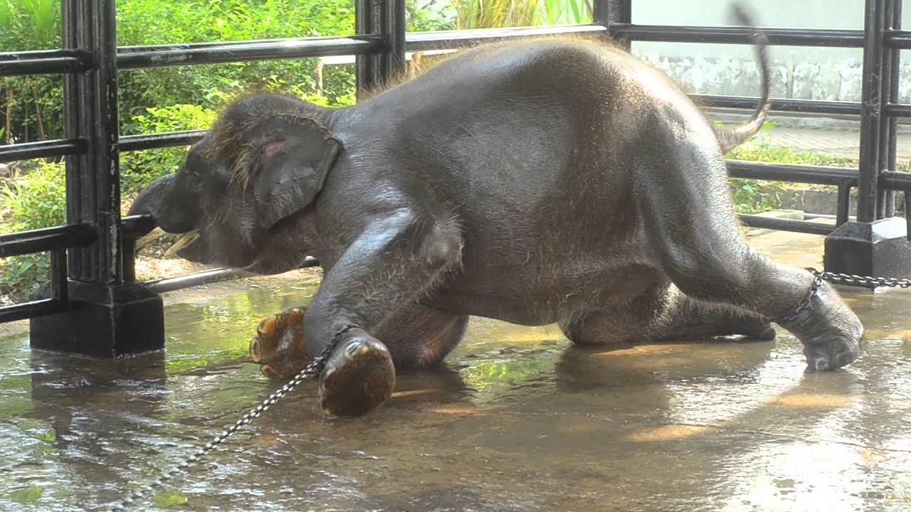 Surabaya Zoo  zoo of death part 2  YouTube