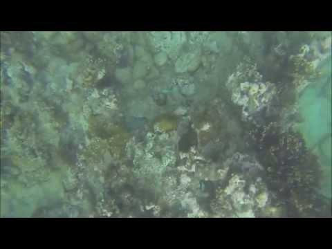 Snorkelling at Hotel Maritim, Balaclava, Mauritius