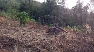 CAU HOAN clip 56 . 18/2/2019  . boi qua sung bat bo vo tui dung chim ma con thuc