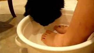 足湯してたらそのお湯をごくごく...、ヒューイ君、熱くないんですか!?