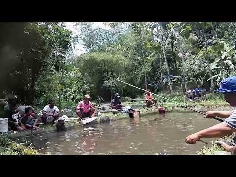 Mancing Borongan, ikannya banyak sekali...    Beran Kidul