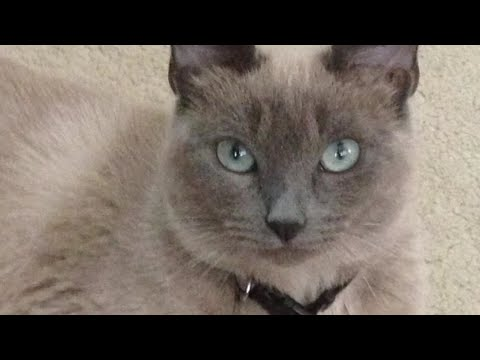 Andi and Kenny  - Family's Cat Accidentally Euthanized During Routine Vet Visit