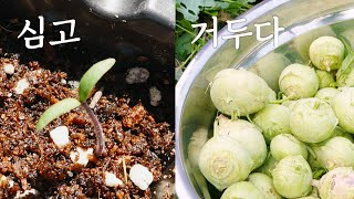 텃밭을 요리하다 : 감자 양파콜라비. 씨앗 파종부터 수…