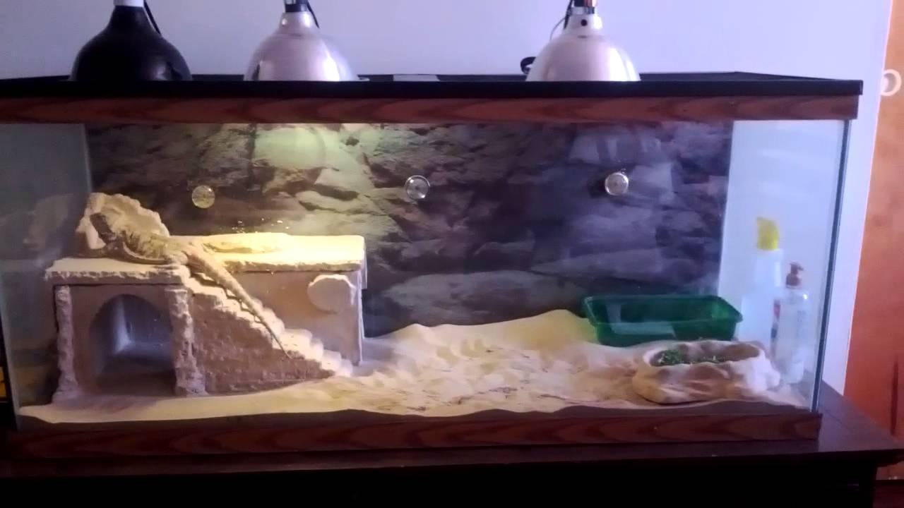 100 Bearded Dragon Setup Youtube