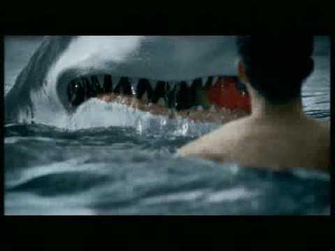 Hd Great White Shark Wallpaper Friendly Shark Youtube