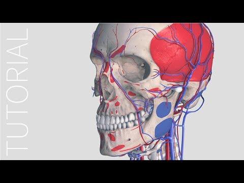 Insertion & Origin - Complete Anatomy - YouTube