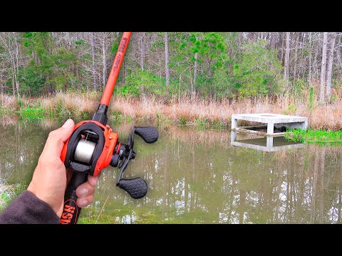 Unexpected Catch While Fishing HIDDEN Swamp!