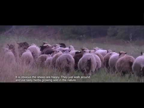 Organic Food from Finland - Organic Sheep