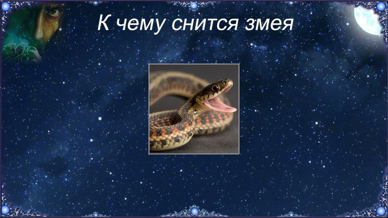Поэтому после сна со змеями нужно быть осторожным и избирательным в поступках, словах и контактах с людьми.