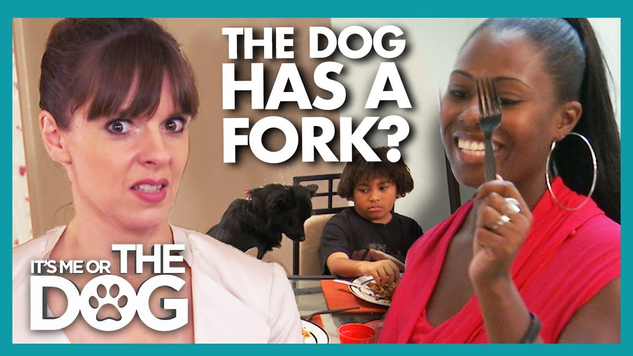 House Divided over Dog Fed Like a King During Mealtimes!  | It's Me or The Dog