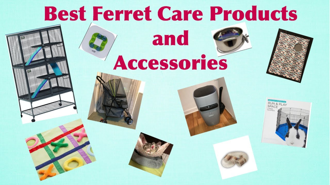 Best Ferret Care Products and Accessories