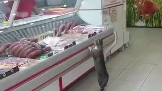 Cat at butcher shop